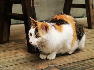 """离职网易考拉后,她为猫咪提供""""吃喝玩乐"""",拿下小米晨兴8000万投资"""