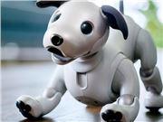 电子宠物 索尼 日本 Aibo