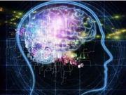 专家 大脑认知 缺陷