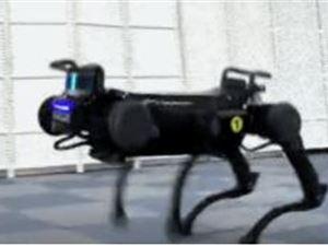 机器狗 绝影 人工智能 浙大机器狗能钻火圈